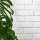 Close up of a monstera plant leaves against white brick wall - PhotoDune Item for Sale
