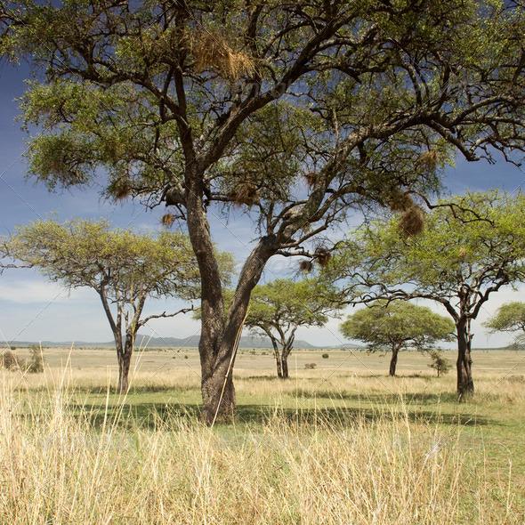 Serengeti landscape - Stock Photo - Images