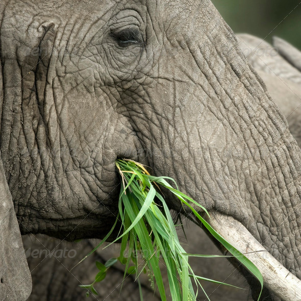 Close-up on a elephant's head - Stock Photo - Images