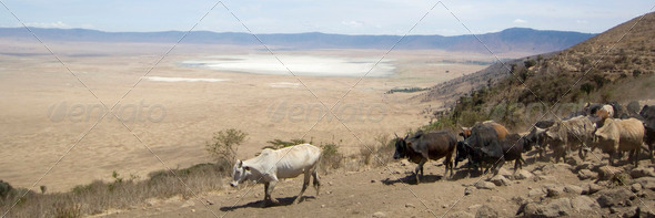 View on the Ngorongoro Crater - Stock Photo - Images