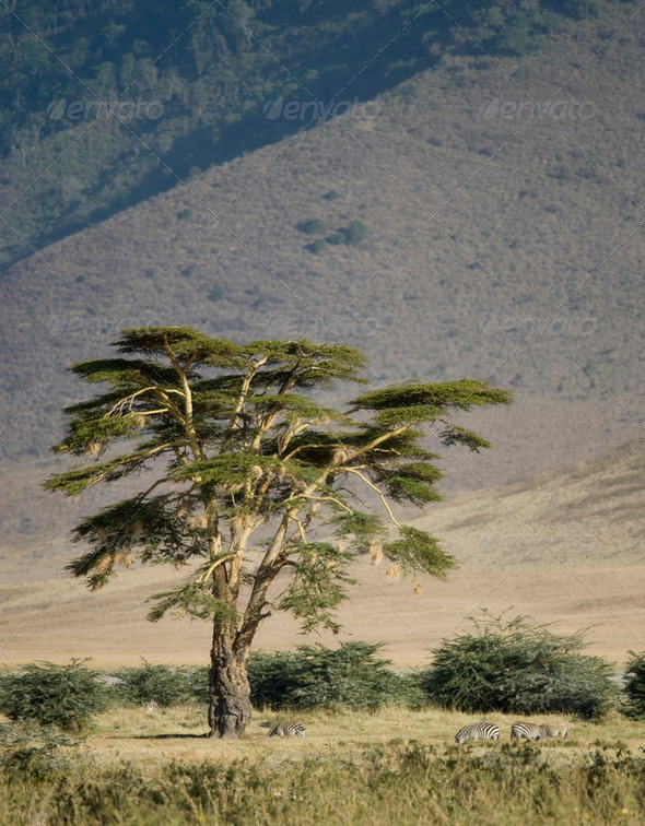 View of the view Ngorongoro Crater, tanzania - Stock Photo - Images