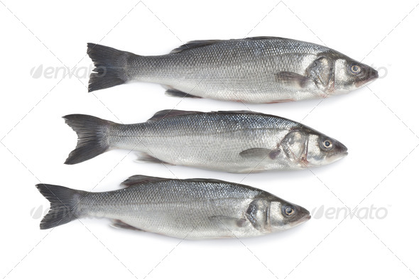 Fresh whole sea basses - Stock Photo - Images