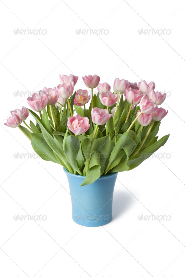 Blue vase with pink tulipes - Stock Photo - Images