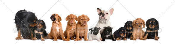 Group of dogs sitting in front of white background, studio shot - Stock Photo - Images