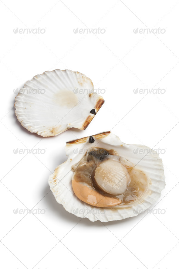 Fresh open scallop in the shell - Stock Photo - Images