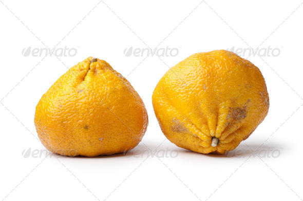 Pair of whole ugli fruit - Stock Photo - Images