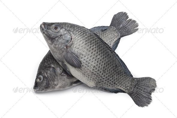 Fresh raw Tilapia fishes - Stock Photo - Images
