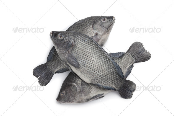 Fresh raw Tilapia fishes - Stock Photo - Images