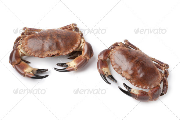 Pair of fresh raw edible sea crabs - Stock Photo - Images