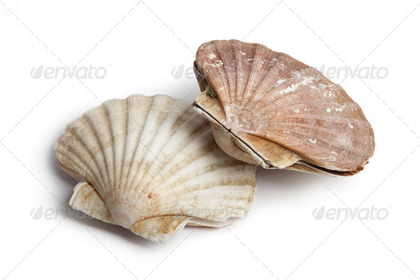 Fresh closed scallops - Stock Photo - Images
