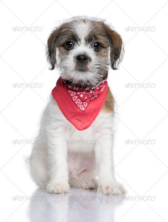 Bastard puppy (3 months) - Stock Photo - Images