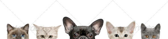 Cropped view of dog head and cat heads in front of white background, studio shot - Stock Photo - Images
