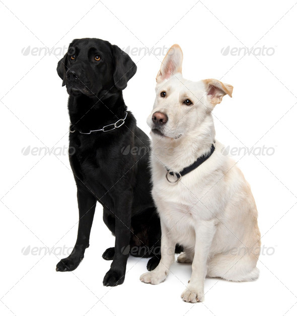 couple of Bastard - Stock Photo - Images