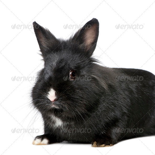 Rabbit (7 months) - Stock Photo - Images