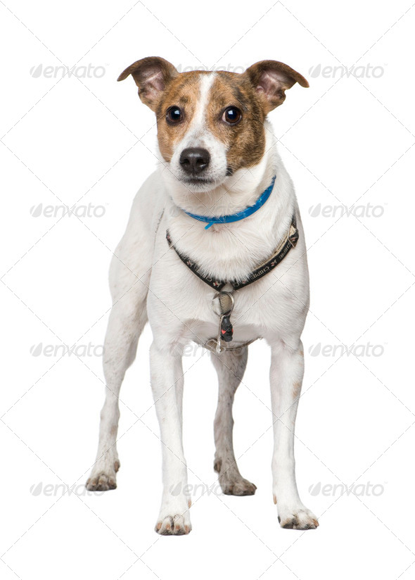 Bastard (5 years) - Stock Photo - Images