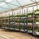 Crates with geranium plants - PhotoDune Item for Sale