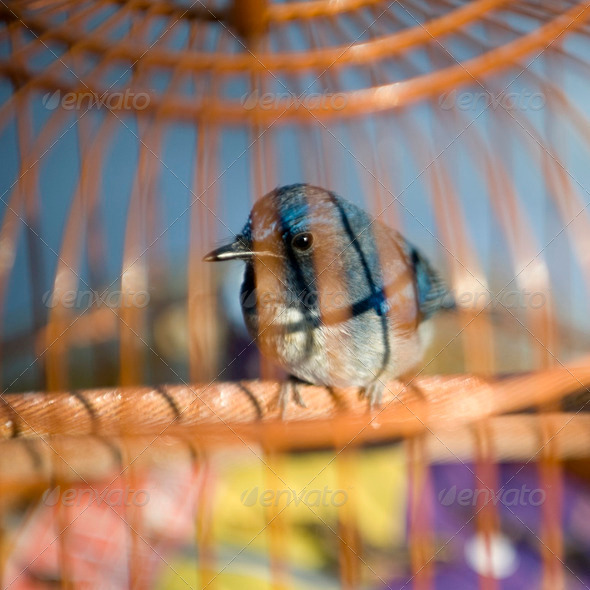 Bird in cage - Stock Photo - Images