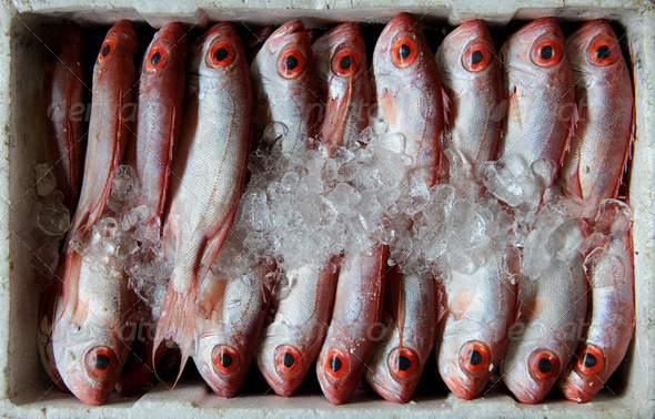 Fresh fish at the Market - Stock Photo - Images