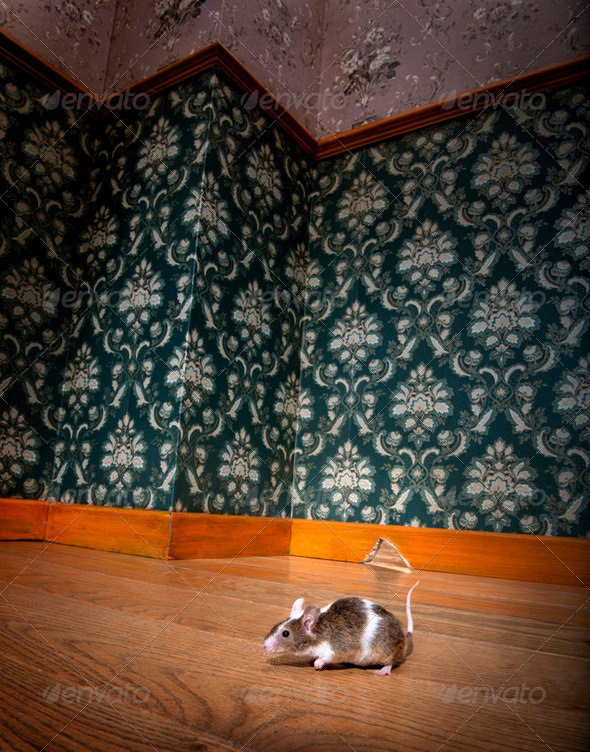 mouse walking in a luxury old-fashioned roon - Stock Photo - Images