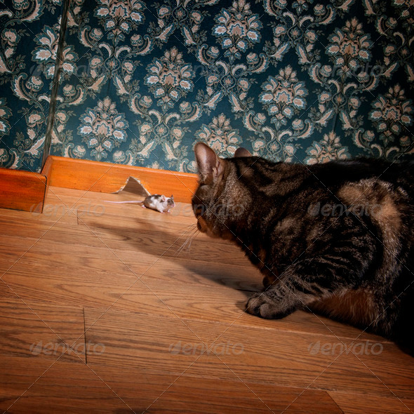 Cat and mouse in a luxury old-fashioned roon - Stock Photo - Images