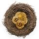 Golden bitcoins in a bird nest - PhotoDune Item for Sale