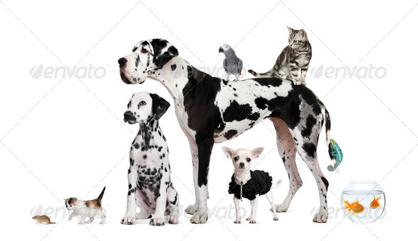 Group of pets standing in front of white background, studio shot - Stock Photo - Images