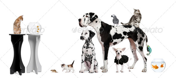 Group portrait of animals in front of black and white background - Stock Photo - Images