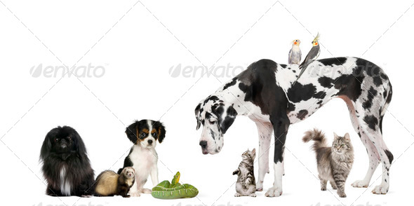 Group of pets in front of white background, studio shot - Stock Photo - Images