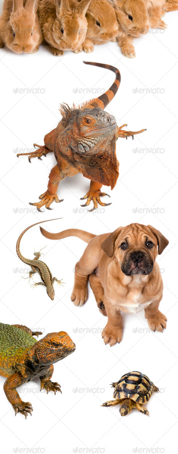 Group of animals in front of white background, studio shot - Stock Photo - Images