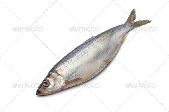 Whole single fresh raw herring - Stock Photo - Images