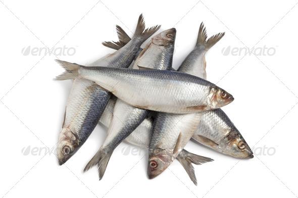 Whole fresh raw herring - Stock Photo - Images