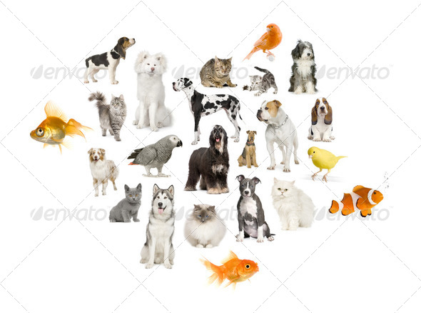 Arrangement of 22 domestic animals - Stock Photo - Images