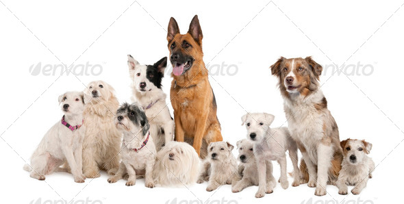 group of dog : german shepherd, border collie, Parson Russell Terrier and some crossbreed - Stock Photo - Images