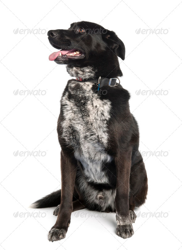 Bastard (3 years old) - Stock Photo - Images