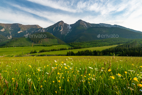 Belianske Tatras Mountains range in Slovakia ans Summer Blooming Meadow - Stock Photo - Images