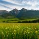 Belianske Tatras Mountains range in Slovakia ans Summer Blooming Meadow - PhotoDune Item for Sale