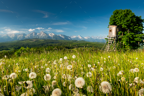 Picturesque Summer Landscape in Lesser Poland and Podhale Mountains Region of Poland - Stock Photo - Images