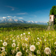 Picturesque Summer Landscape in Lesser Poland and Podhale Mountains Region of Poland - PhotoDune Item for Sale