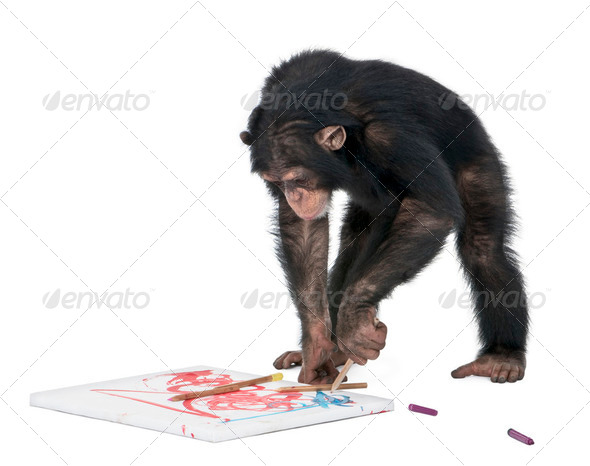 Chimpanzee drawing on a canvas - Simia troglodytes (5 years old) - Stock Photo - Images