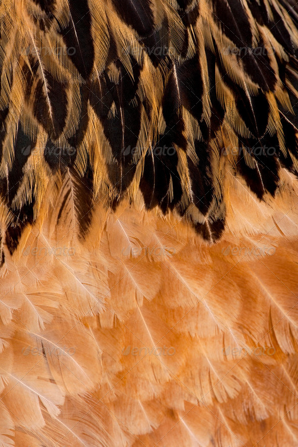 Close-up on feathers - Stock Photo - Images
