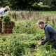 Two farmers in a field, holding bunches of freshly picked carrots. - PhotoDune Item for Sale