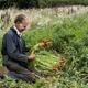 Farmer kneeling in a field, holding bunch of freshly picked carrots. - PhotoDune Item for Sale