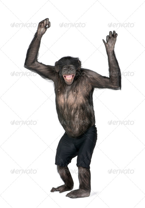 Portrait of smiling chimpanzee in shorts with arms raised - Stock Photo - Images