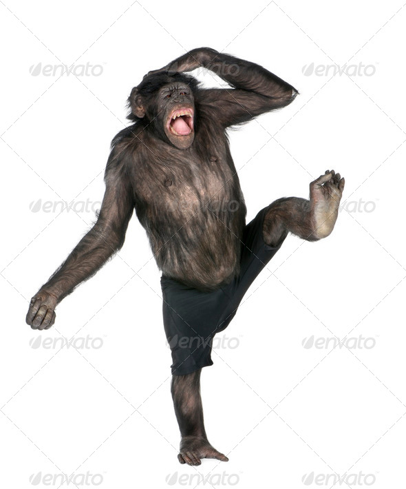 monkey monkeying  and screaming on one foot - Stock Photo - Images