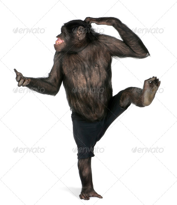 monkey  dancing on one foot - Stock Photo - Images