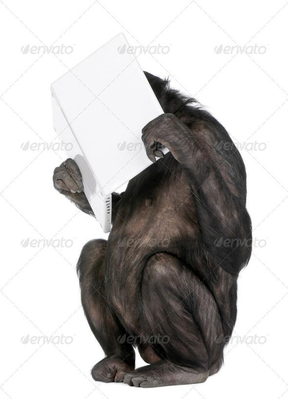 Monkey playing with a laptop - Stock Photo - Images
