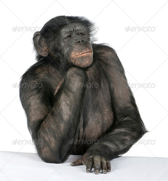 Monkey at a table - Stock Photo - Images