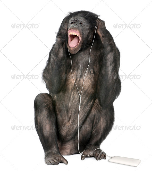 Mixed breed between Chimpanzee and Bonobo listening to music, 20 years old, studio shot - Stock Photo - Images