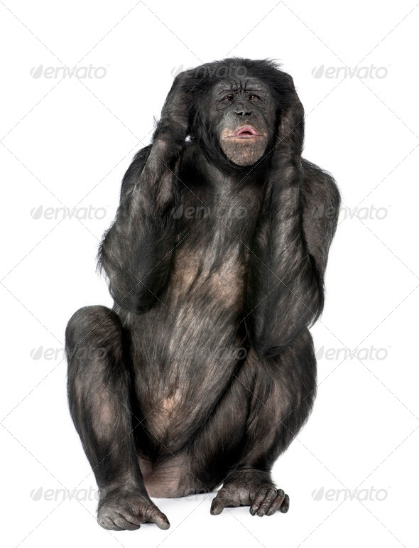 Hear no Evil monkey - Stock Photo - Images