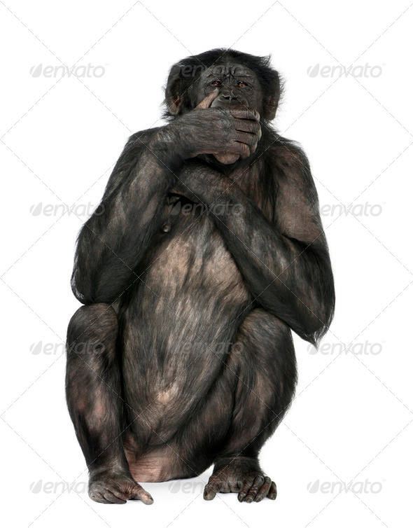 speak no evil monkey - Stock Photo - Images